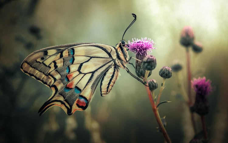 plants, insect, butterfly, wings, stems, thistle, swallowtail, vinogradof florentin