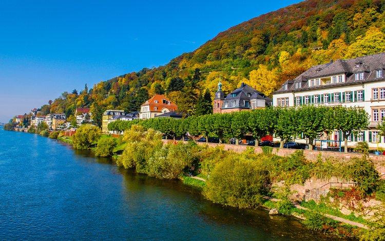 trees, the city, autumn, coast, home, germany, heidelberg