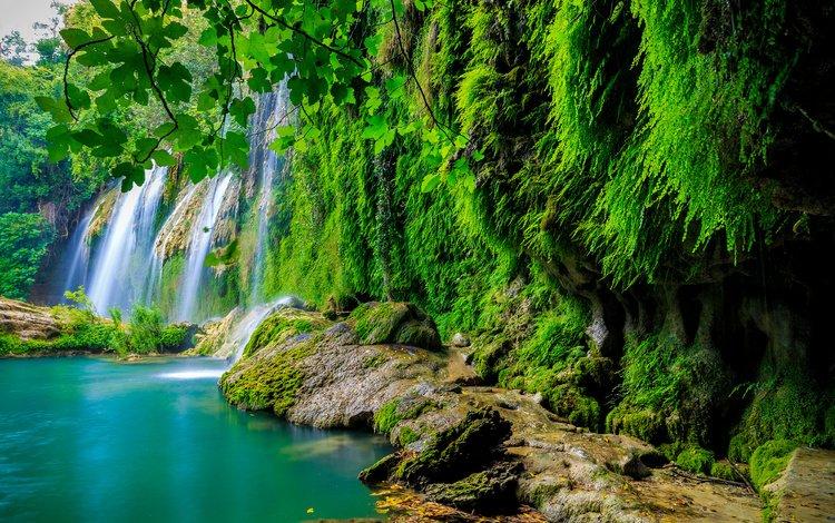 камни, тропики, зелень, лес, листья, скала, ветки, водопад, мох, stones, tropics, greens, forest, leaves, rock, branches, waterfall, moss