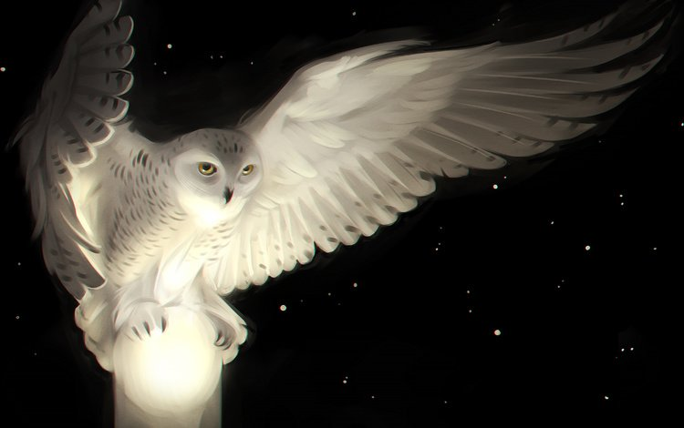 арт, сова, звезды, крылья, птица, белая сова, белая сова-, art, owl, stars, wings, bird, white owl, white owl-