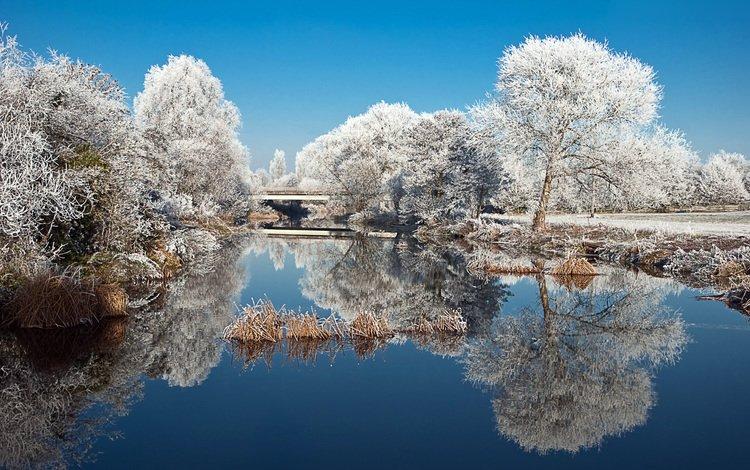 trees, lake, nature, winter, reflection, landscape, park, frost, pond