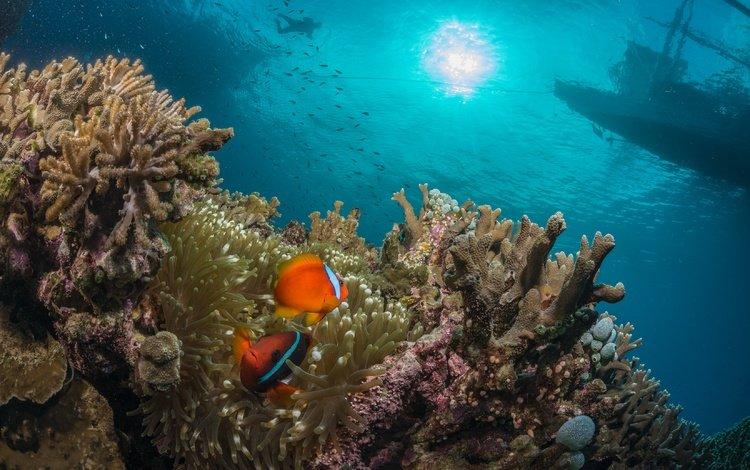 sea, fish, the ocean, corals, reef, underwater world, diving, coral reef