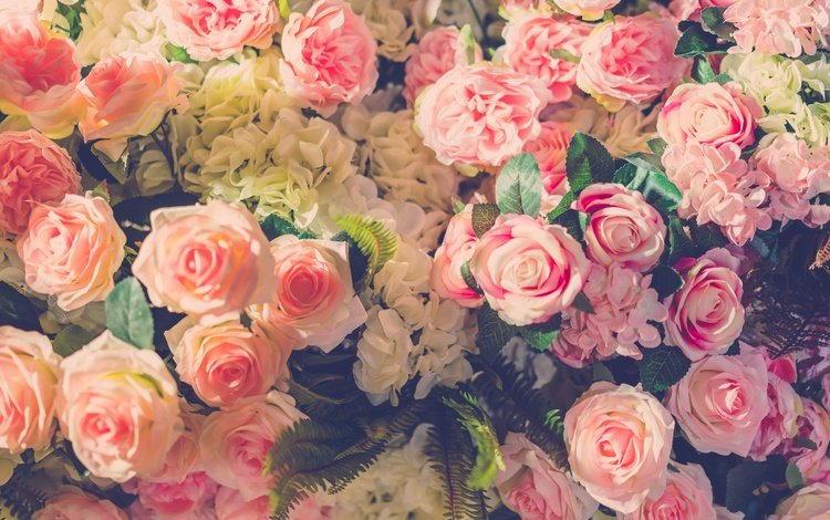 flowers, buds, roses, petals, bouquet