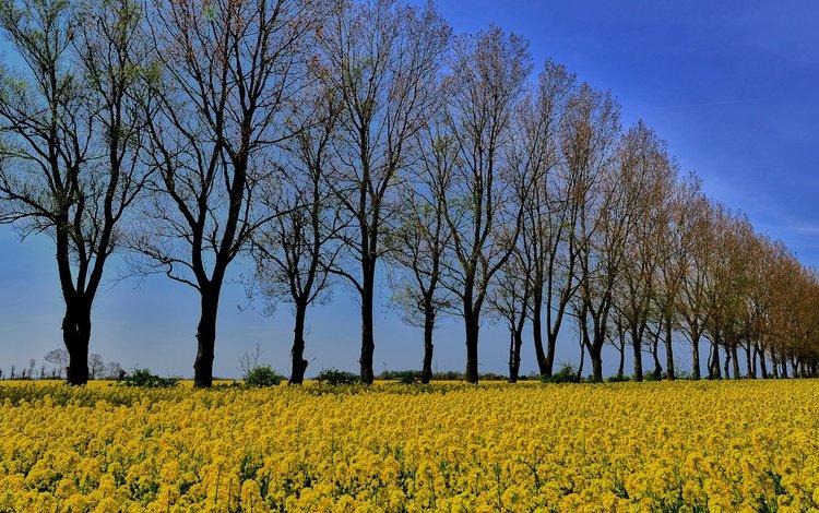 the sky, flowers, trees, field, trunks