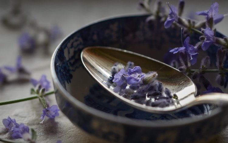 flowers, macro, lavender, spoon
