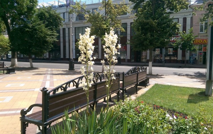 flowers, trees, nature, summer, benches, russia, the building, krasnodar