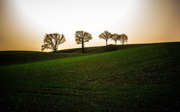 the sky, trees, the evening, hills, field