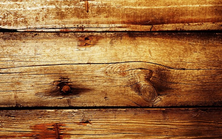 tree, texture, background, board, wooden background