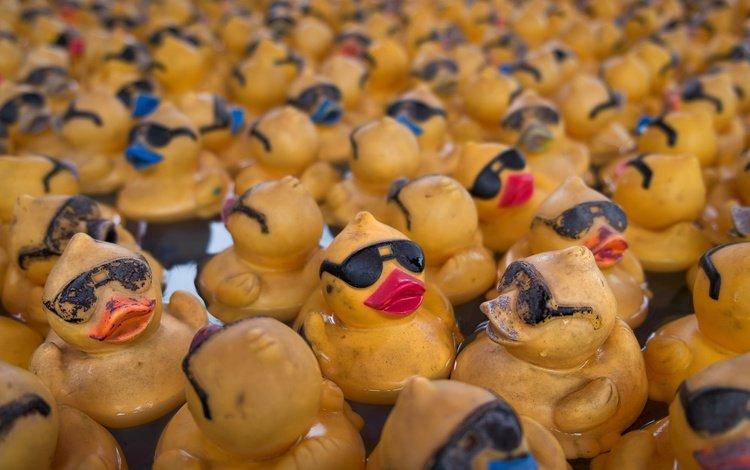 фон, игрушки, утята, утки, утка, резиновый утенок, резиновые утята, background, toys, ducklings, duck, rubber duck, rubber ducks