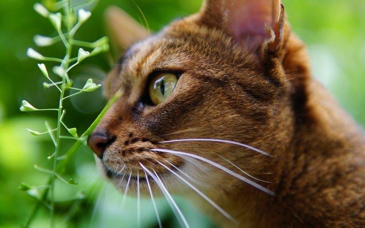 глаза, фон, кот, мордочка, усы, кошка, взгляд, профиль, растение, plant, eyes, background, cat, muzzle, mustache, look, profile