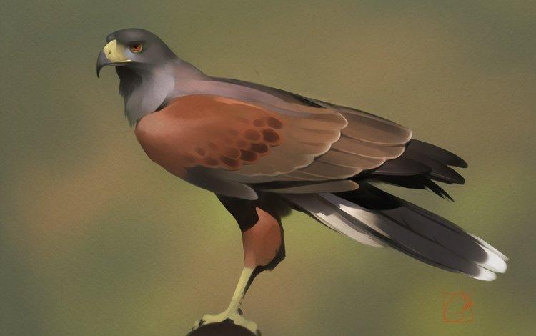 art, predator, bird, beak, feathers, desert buzzard, alexander khitrov