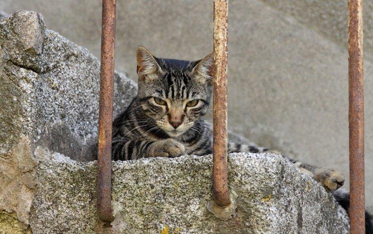 лестница, фон, кот, мордочка, усы, кошка, взгляд, ladder, background, cat, muzzle, mustache, look