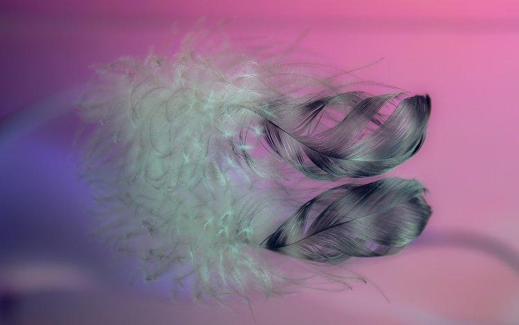 макро, фон, перья, перо, перышки, macro, background, feathers, pen