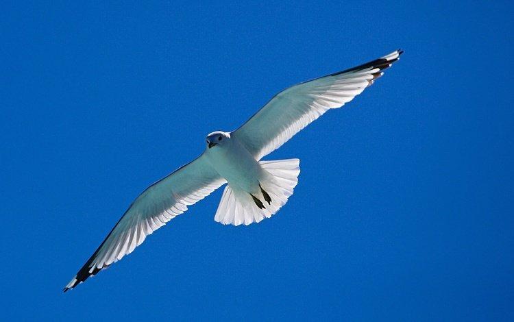 the sky, flight, wings, seagull, bird