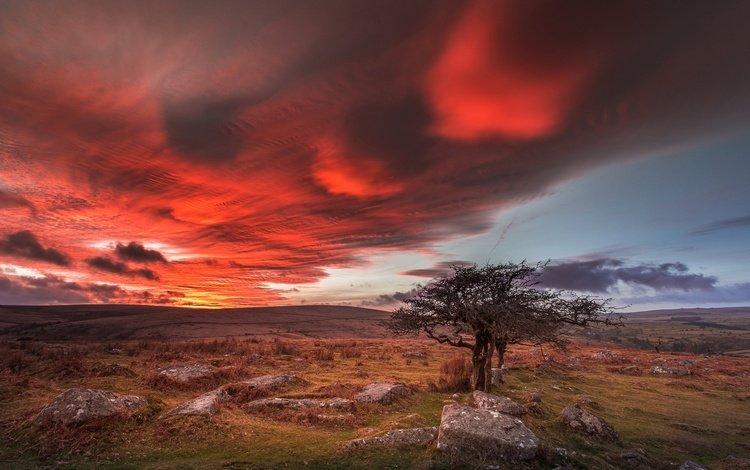 clouds, tree, stones, england, glow, dartmoor, devon