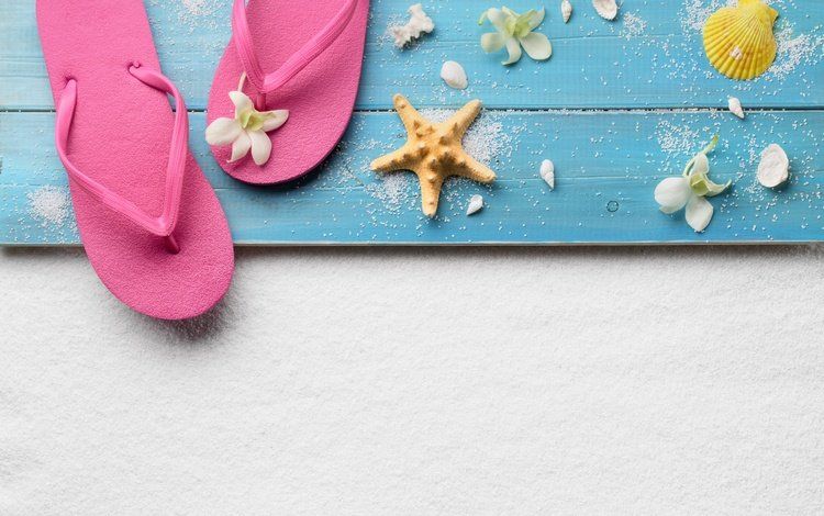 beach, summer, shell, stay, starfish, vacation, slates, mprsa star