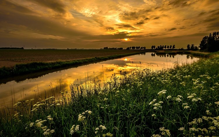 the sky, flowers, clouds, river, nature, plants, landscape, field, horizon