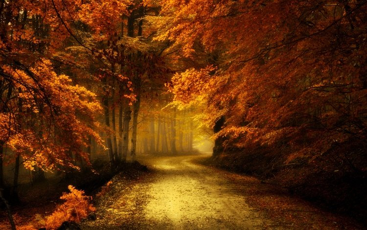 road, trees, nature, leaves, landscape, branches, autumn