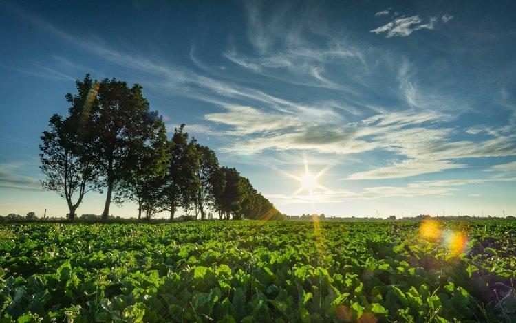 небо, горизонт, облака, деревья, солнце, природа, растения, пейзаж, поле, the sky, horizon, clouds, trees, the sun, nature, plants, landscape, field