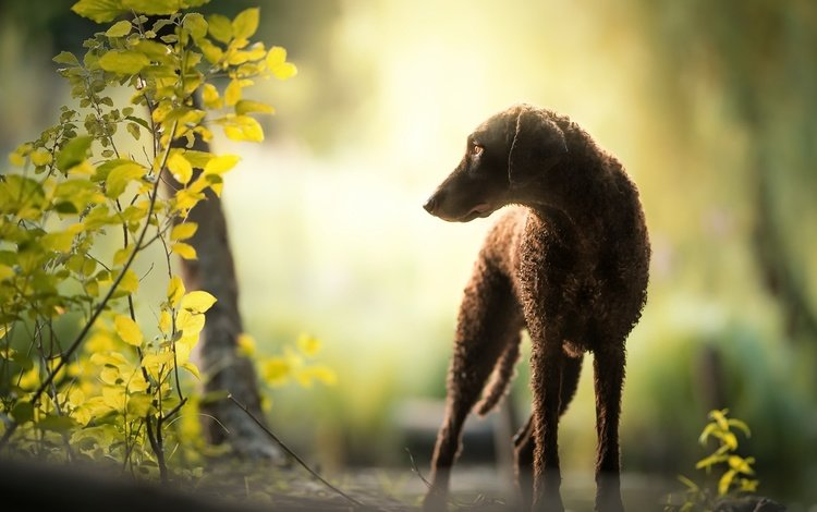 nature, leaves, muzzle, branches, look, dog, each, elektra, nicole trenker fotografie