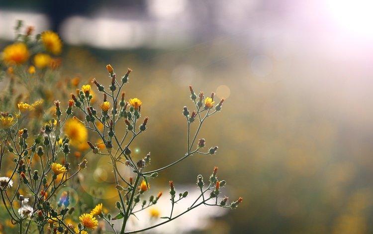 the sun, glare, wildflowers, flowers, stems