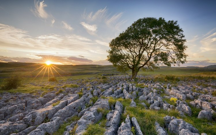 the sky, light, clouds, the sun, tree, stones, morning, field