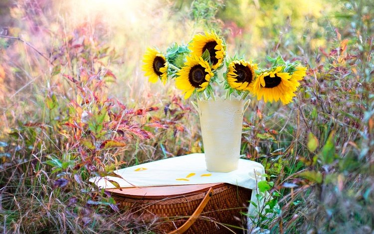 flowers, grass, nature, plants, bouquet, basket, sunflowers, vase, bokeh
