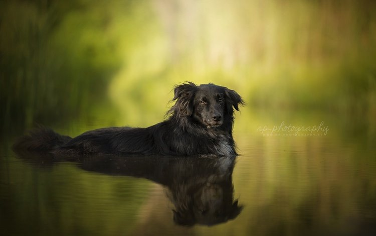 water, reflection, muzzle, summer, look, dog, each