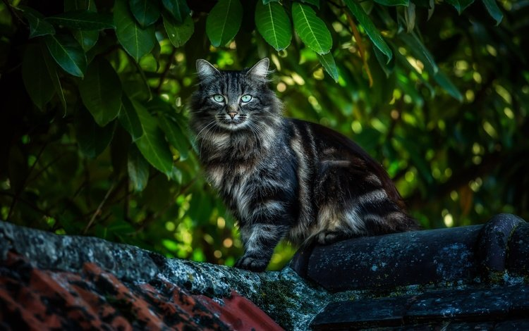 зелень, кот, мордочка, усы, лапы, кошка, взгляд, крыша, greens, cat, muzzle, mustache, paws, look, roof