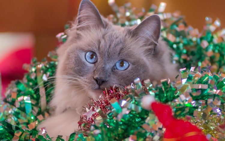 новый год, кот, кошка, мишура, new year, cat, tinsel
