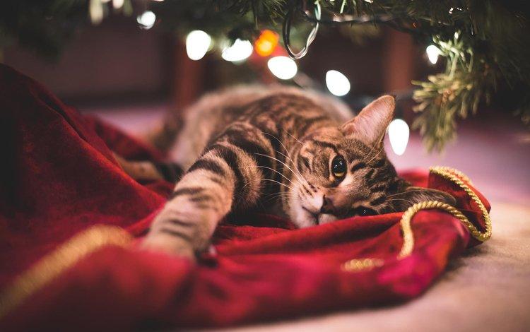 новый год, елка, кот, мордочка, усы, кошка, взгляд, new year, tree, cat, muzzle, mustache, look