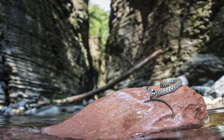 природа, размытость, камень, змея, рептилия, пресмыкающиеся, davide lopresti, nature, blur, stone, snake, reptile, reptiles