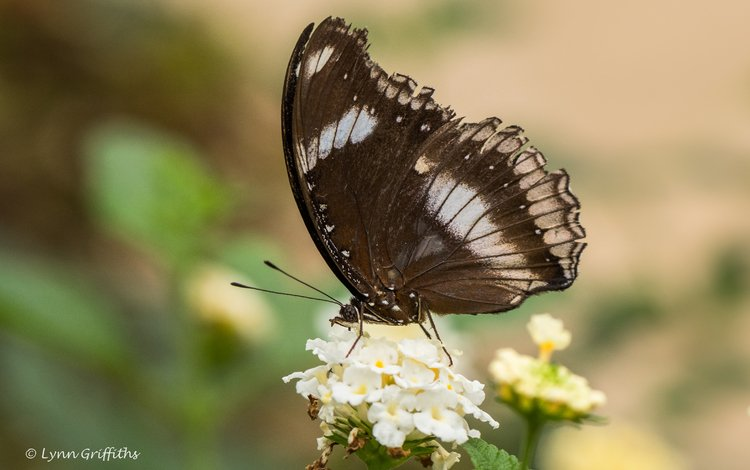 flowers, nature, insect, butterfly, wings, lynn griffiths