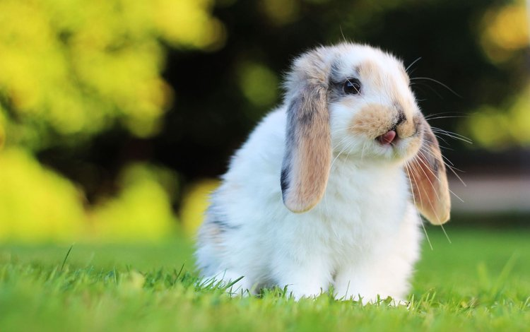 grass, muzzle, look, rabbit, ears, hare, rodent