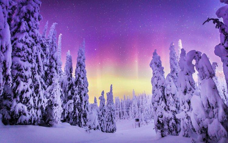 природа, лес, зима, пейзаж, северное сияние, steve rosset, nature, forest, winter, landscape, northern lights