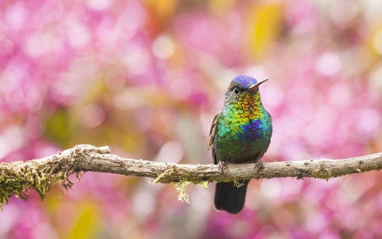 ветка, размытость, птица, клюв, перья, колибри, branch, blur, bird, beak, feathers, hummingbird