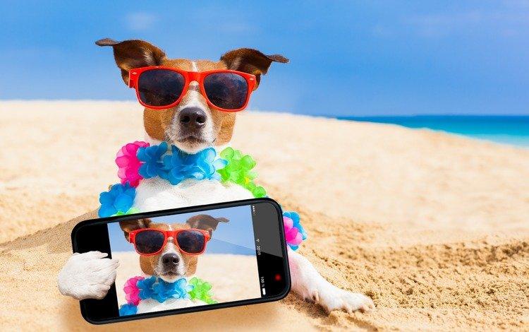 море, телефон, песок, селфи, пляж, джек-рассел-терьер, мордочка, взгляд, очки, собака, юмор, sea, phone, sand, selfie, beach, jack russell terrier, muzzle, look, glasses, dog, humor