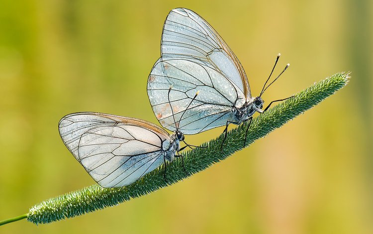 grass, nature, background, wings, insects, butterfly, plant, davide lopresti