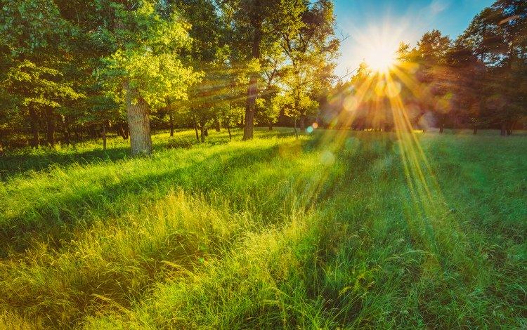трава, поляна, деревья, солнце, природа, лес, пейзаж, утро, лето, grass, glade, trees, the sun, nature, forest, landscape, morning, summer