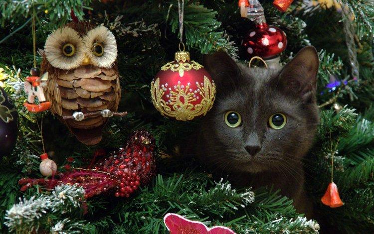 сова, новый год, елка, кот, мордочка, усы, кошка, взгляд, dmitriy ganich, owl, new year, tree, cat, muzzle, mustache, look