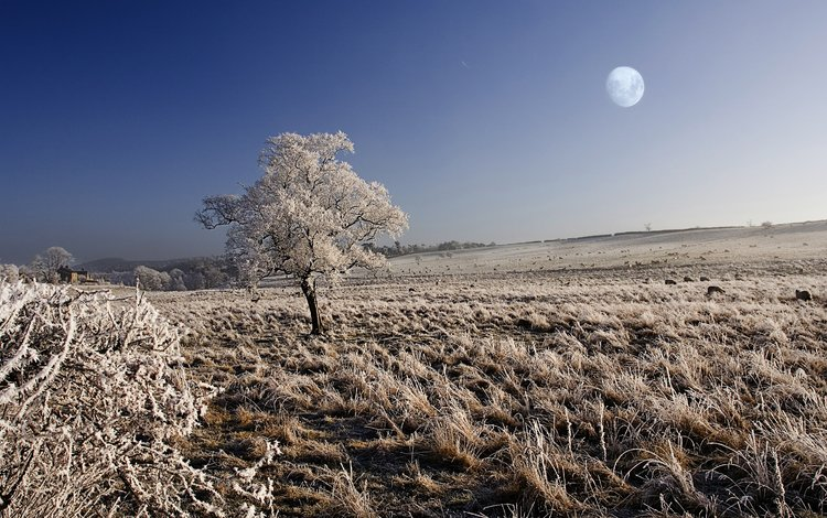 the sky, nature, tree, winter, landscape, field, frost, the moon