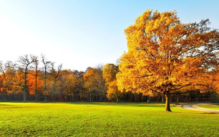 the sky, trees, nature, landscape, autumn, grass.