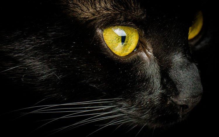 кот, мордочка, усы, кошка, взгляд, желтые глаза, cat, muzzle, mustache, look, yellow eyes