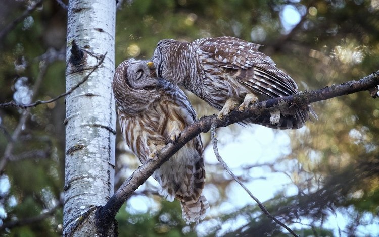 tree, birds, a couple, kiss, owls