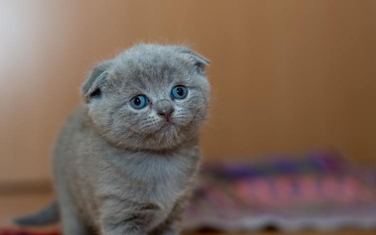 кот, кошка, котенок, cat, kitty