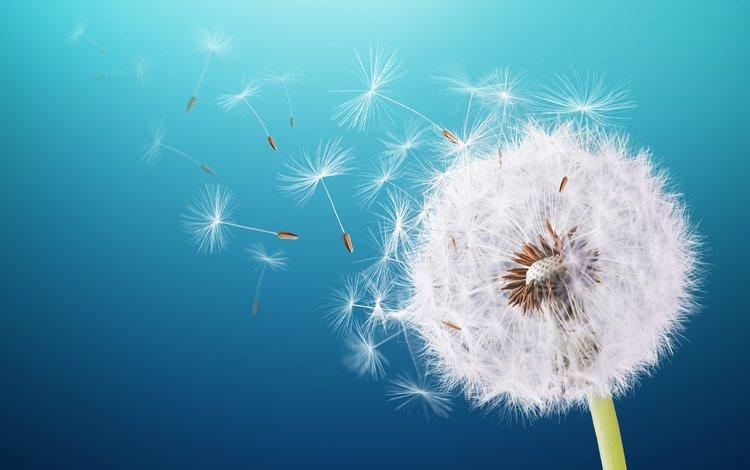 макро, фон, цветок, одуванчик, пушинки, былинки, macro, background, flower, dandelion, fuzzes, blade