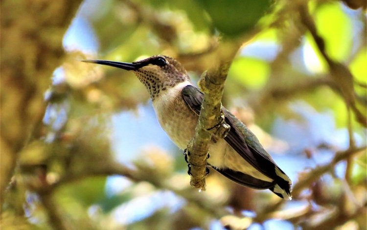 branches, blur, bird, beak, feathers, hummingbird