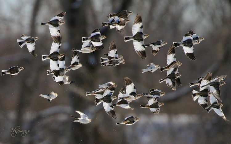 nature, background, flight, wings, birds
