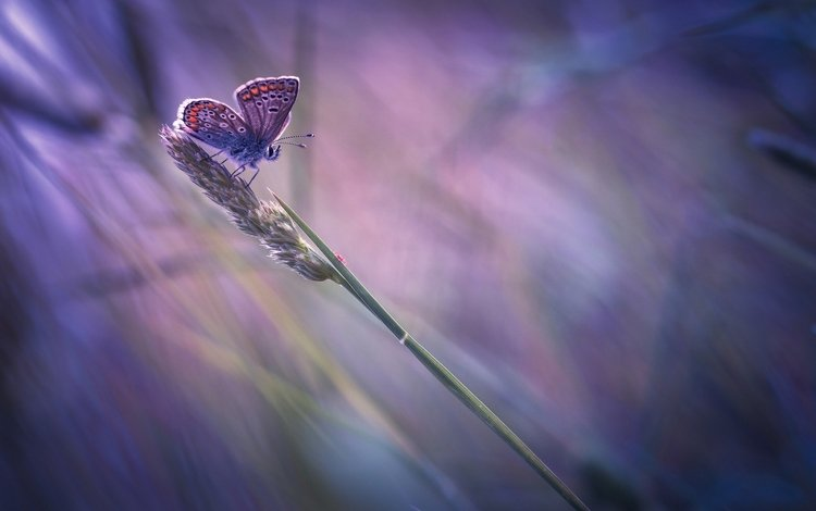 insect, butterfly, wings, blur, a blade of grass