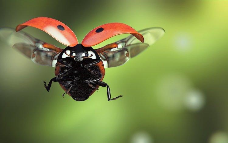 арт, насекомое, полет, крылья, божья коровка, monteillard-damien, art, insect, flight, wings, ladybug